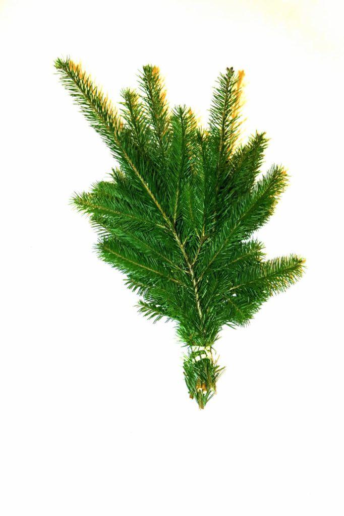 Douglas fir boughs (300 g)