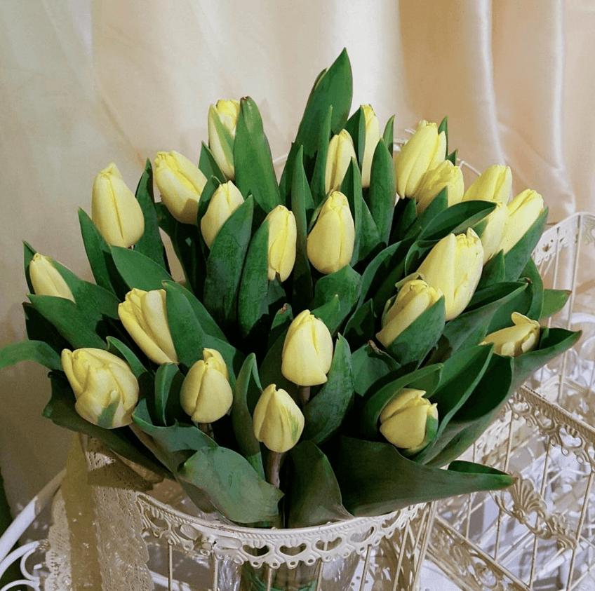 Krēmkrāsas tulpes (25 gab.)