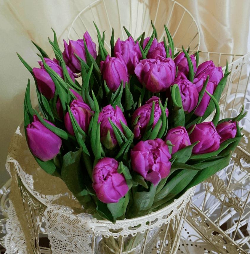 Lillā tulpes (25 gab.)